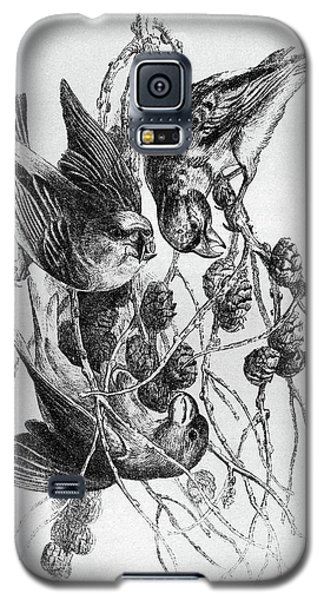 Blackburn Birds, 1895 Galaxy S5 Case by Granger