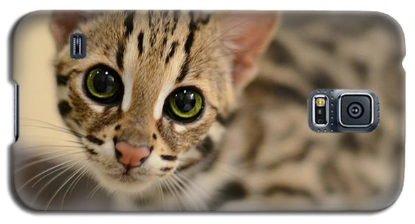 Asian Leopard Cub Galaxy S5 Case by Laura Fasulo