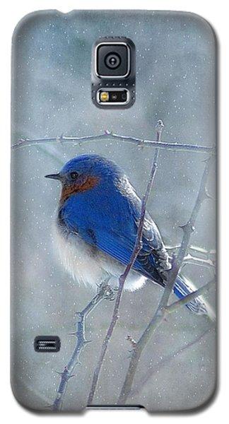 Bird Galaxy S5 Cases - Blue Bird  Galaxy S5 Case by Fran J Scott