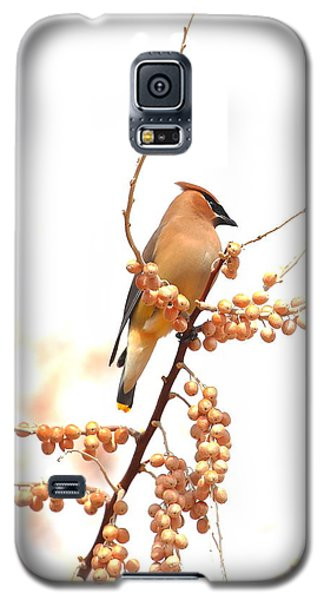Cedar Wax Wing Galaxy S5 Case by Floyd Tillery