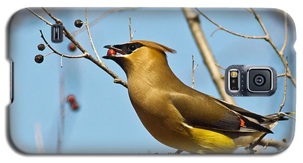 Cedar Waxwing With Berry Galaxy S5 Case by Robert Frederick