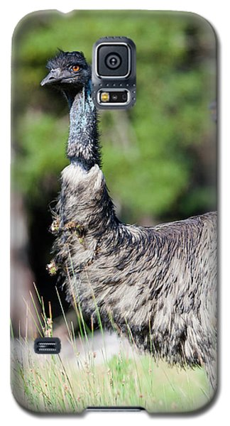 Emu (dromaius Novaehollandiae Galaxy S5 Case by Martin Zwick