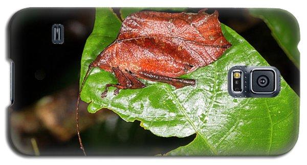 Leaf Mimic Katydid Galaxy S5 Case by Dr Morley Read