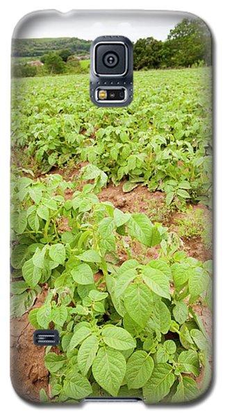 Potatoes Growing At Washingpool Farm Galaxy S5 Case by Ashley Cooper