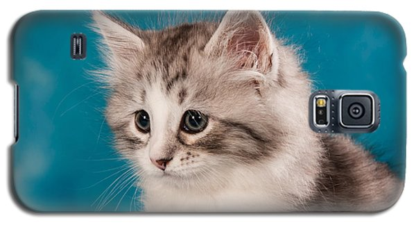 Sibirian Cat Kitten Galaxy S5 Case by Doreen Zorn
