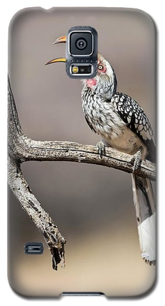Southern Yellow-billed Hornbill Galaxy S5 Case by Tony Camacho