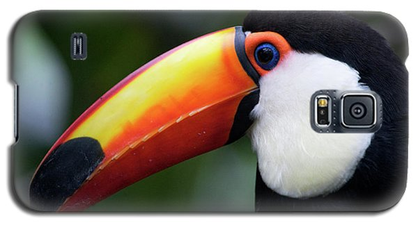Toco Toucan (ramphastos Toco Galaxy S5 Case by Andres Morya Hinojosa