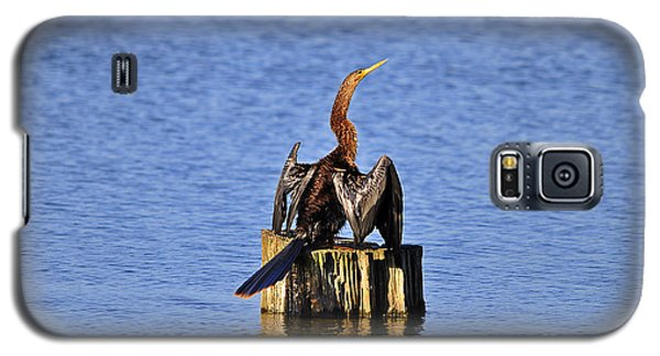 Wet Wings Galaxy S5 Case by Al Powell Photography USA