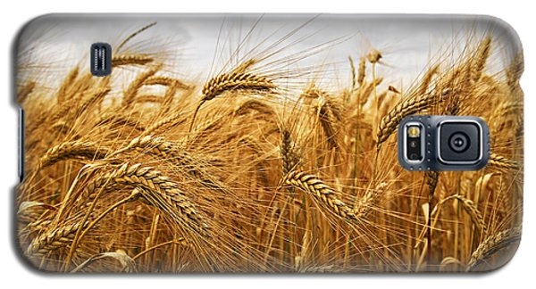 Wheat Galaxy S5 Case by Elena Elisseeva
