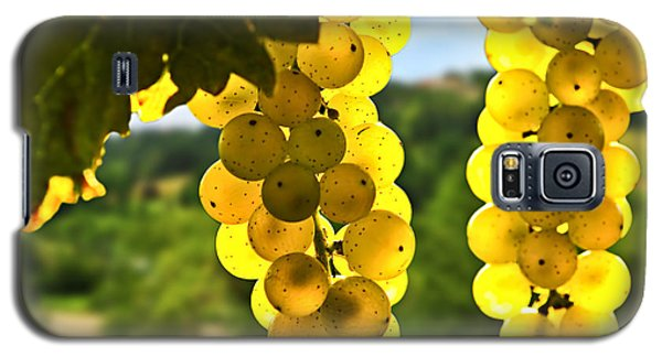 Yellow Grapes Galaxy S5 Case by Elena Elisseeva