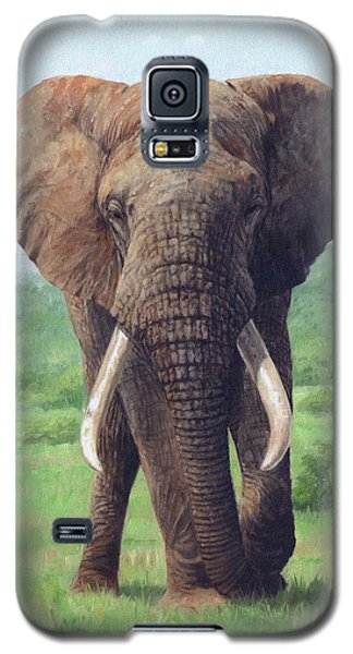 African Elephant Galaxy S5 Case by David Stribbling