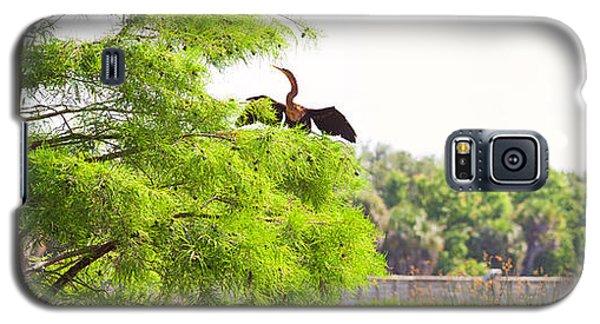 Anhinga Anhinga Anhinga On A Tree Galaxy S5 Case by Panoramic Images