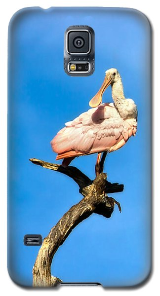 Roseate Spoonbill Galaxy S5 Case by Mark Andrew Thomas