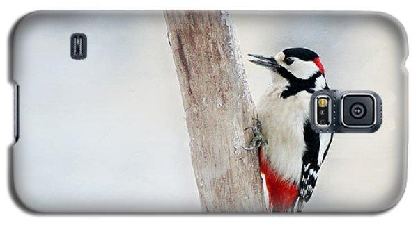 Woodpecker Galaxy S5 Case by Heike Hultsch