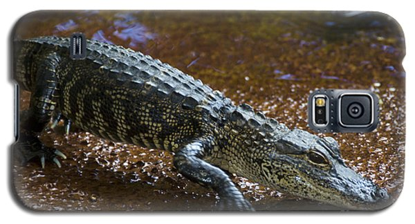American Alligator Galaxy S5 Case by Mark Newman