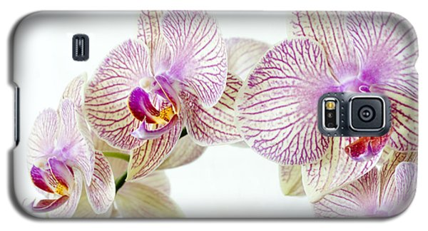 Phalaenopsis Orchid Phalaenopsis Sp Galaxy S5 Case by Lawrence Lawry