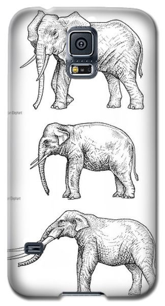 Elephant Evolution, Artwork Galaxy S5 Case by Gary Hincks