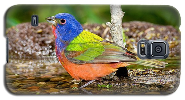 Painted Bunting Galaxy S5 Case by Anthony Mercieca