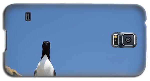 A Curious Bird Galaxy S5 Case by Anne Gilbert
