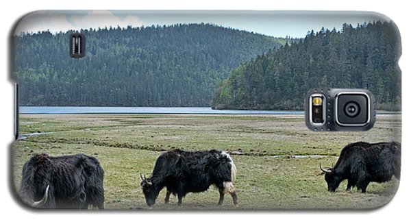 A Herd Of Yaks In Potatso National Park Galaxy S5 Case by Tony Camacho