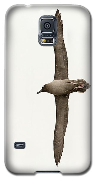 A Light Mantled Albatross Galaxy S5 Case by Ashley Cooper