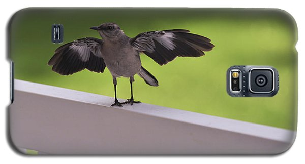 A Little Visitor Northern Mockingbird Galaxy S5 Case by Terry DeLuco