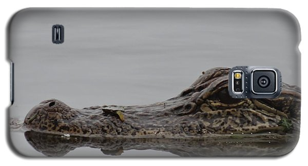 Alligator Eyes Galaxy S5 Case by Dan Sproul