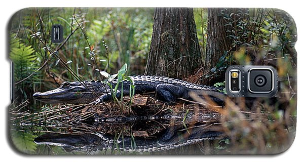 Alligator In Okefenokee Swamp Galaxy S5 Case by William H. Mullins