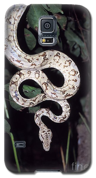 Amazon Tree Boa Galaxy S5 Case by James Brunker