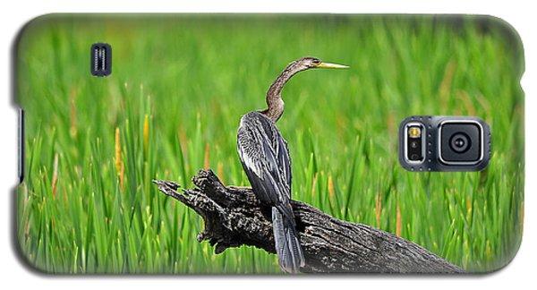 American Anhinga Galaxy S5 Case by Al Powell Photography USA