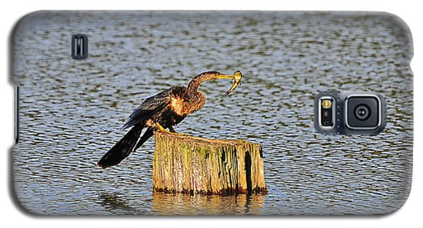American Anhinga Angler Galaxy S5 Case by Al Powell Photography USA