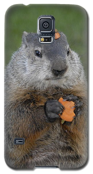 And Have You Looked In The Mirror Lately Galaxy S5 Case by Paul W Faust -  Impressions of Light