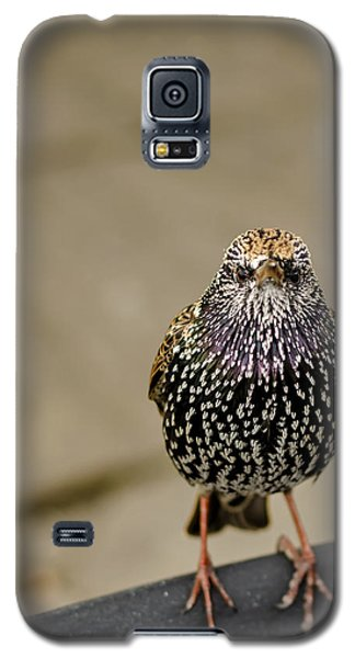 Angry Bird Galaxy S5 Case by Heather Applegate