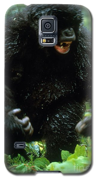 Angry Mountain Gorilla Galaxy S5 Case by Art Wolfe