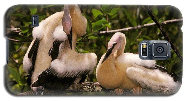 Anhinga Chicks Galaxy S5 Case by Ron Sanford