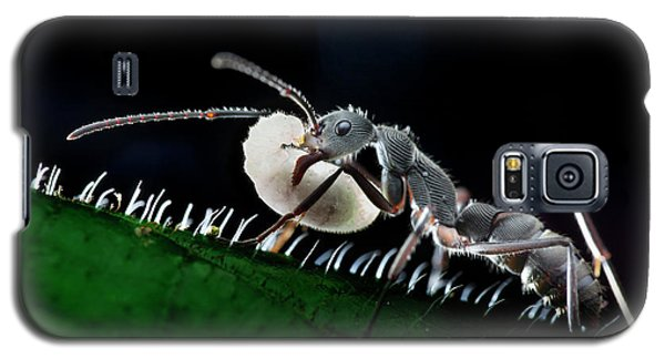 Ant Carrying Larva Galaxy S5 Case by Melvyn Yeo