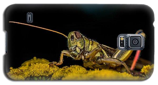 Antenna Down Galaxy S5 Case by Paul Freidlund