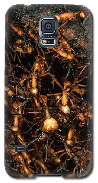 Army Ant Bivouac Site Galaxy S5 Case by Gregory G. Dimijian, M.D.