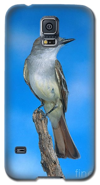 Ash-throated Flycatcher Galaxy S5 Case by Anthony Mercieca