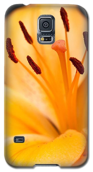 Still Life Galaxy S5 Cases - Asian Lily Galaxy S5 Case by Sebastian Musial