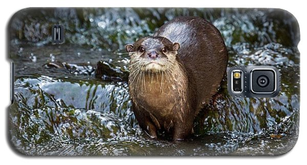 Asian Small-clawed Otter Galaxy S5 Case by Paul Williams