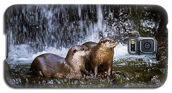 Asian Small-clawed Otters Galaxy S5 Case by Paul Williams