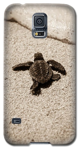 Baby Sea Turtle Galaxy S5 Case by Sebastian Musial