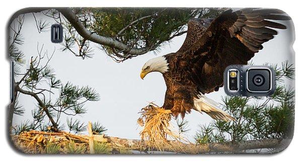 Bald Eagle Building Nest Galaxy S5 Case by Everet Regal