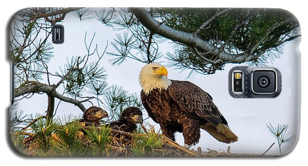 Bald Eagle With Eaglets  Galaxy S5 Case by Everet Regal