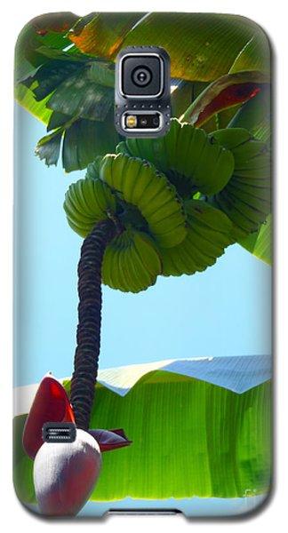 Banana Stalk Galaxy S5 Case by Carey Chen