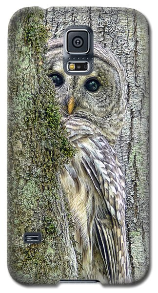 Green Galaxy S5 Cases - Barred Owl Peek a Boo Galaxy S5 Case by Jennie Marie Schell