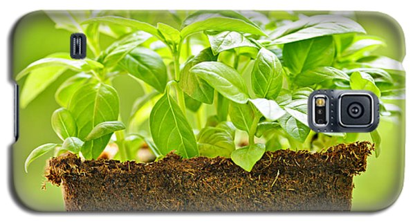 Plant Galaxy S5 Cases - Basil Galaxy S5 Case by Elena Elisseeva