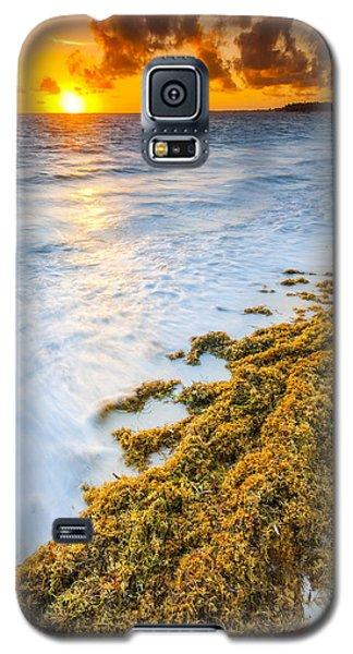 Seascape Galaxy S5 Cases - Beach Sunrise Galaxy S5 Case by Sebastian Musial