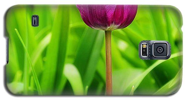 Beauty At A Glance- Purple Gems- Purple Tulips Rhode Island Tulips Purple Flower Galaxy S5 Case by Lourry Legarde